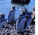 7 Seas Luxury Cruises Puerto Madryn